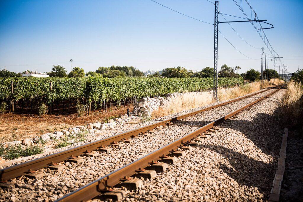 vigneto e rotaie Puglia terrachevive