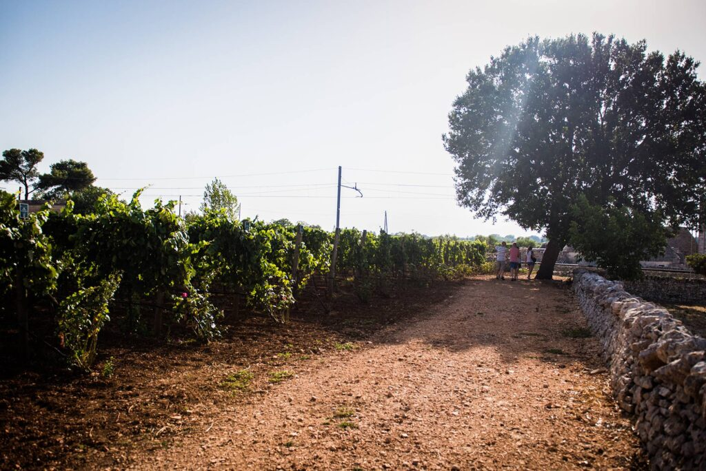 degustare-vino-puglia-terrachevive